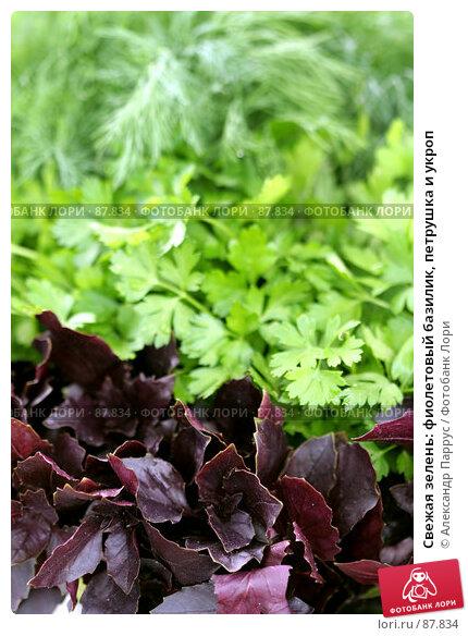 Свежая зелень: фиолетовый базилик, петрушка и укроп, фото № 87834, снято 8 сентября 2007 г. (c) Александр Паррус / Фотобанк Лори