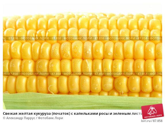 Свежая желтая кукуруза (початок) с капельками росы и зеленым листиком на белом фоне, фото № 87858, снято 18 сентября 2007 г. (c) Александр Паррус / Фотобанк Лори