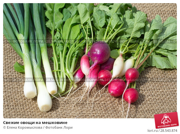 Купить «Свежие овощи на мешковине», фото № 28543874, снято 4 июня 2018 г. (c) Елена Коромыслова / Фотобанк Лори