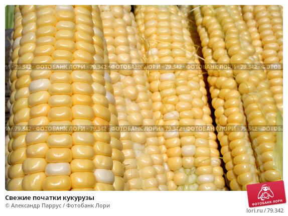 Свежие початки кукурузы, фото № 79342, снято 16 июля 2006 г. (c) Александр Паррус / Фотобанк Лори
