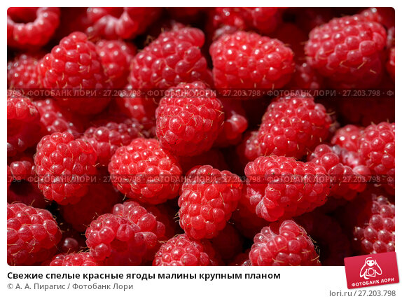 Купить «Свежие спелые красные ягоды малины крупным планом», фото № 27203798, снято 8 декабря 2017 г. (c) А. А. Пирагис / Фотобанк Лори