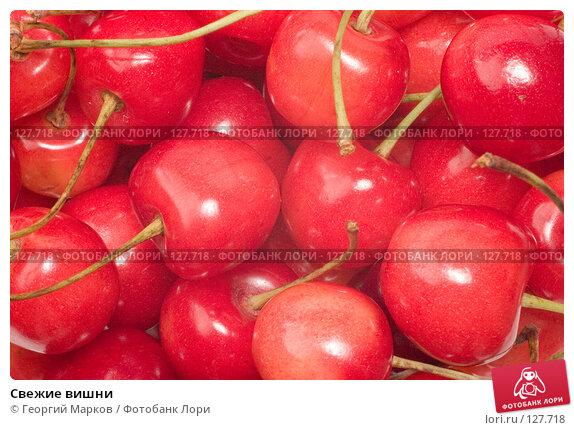 Свежие вишни, фото № 127718, снято 12 июля 2006 г. (c) Георгий Марков / Фотобанк Лори