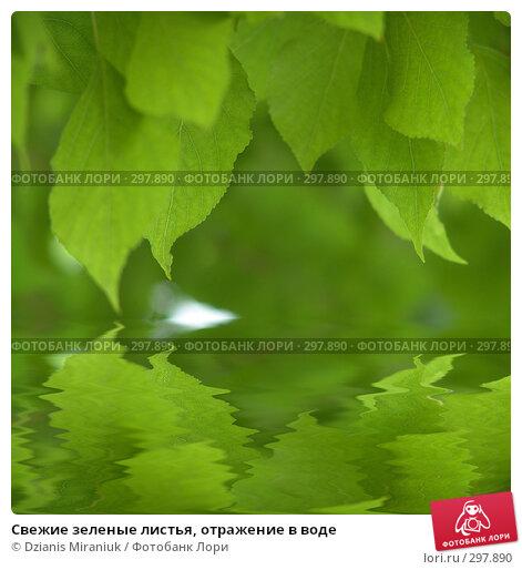 Свежие зеленые листья, отражение в воде, фото № 297890, снято 18 мая 2008 г. (c) Dzianis Miraniuk / Фотобанк Лори