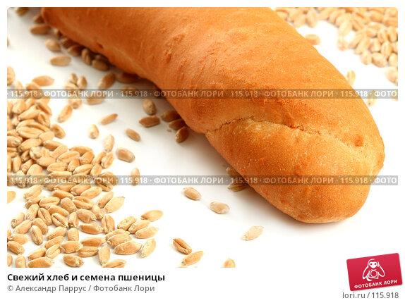 Свежий хлеб и семена пшеницы, фото № 115918, снято 18 сентября 2007 г. (c) Александр Паррус / Фотобанк Лори