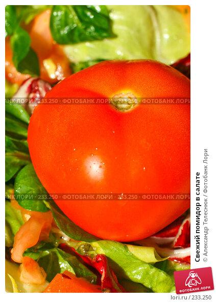 Свежий помидор в салате, фото № 233250, снято 28 января 2008 г. (c) Александр Телеснюк / Фотобанк Лори