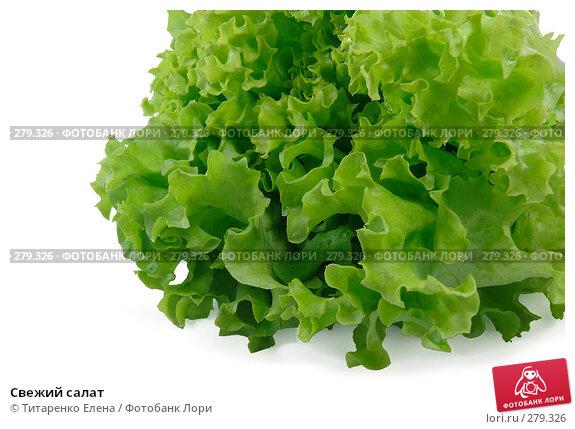 Свежий салат, фото № 279326, снято 16 апреля 2008 г. (c) Титаренко Елена / Фотобанк Лори