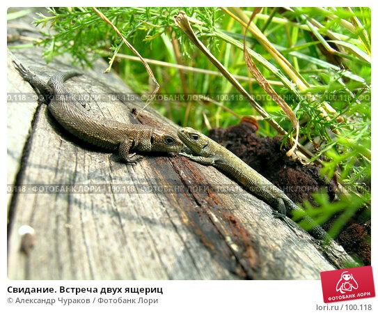 Свидание. Встреча двух ящериц, фото № 100118, снято 14 августа 2005 г. (c) Александр Чураков / Фотобанк Лори