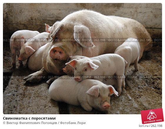 Свиноматка с поросятами, фото № 262198, снято 7 апреля 2006 г. (c) Виктор Филиппович Погонцев / Фотобанк Лори
