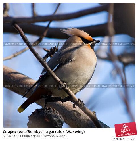 птица средней полосы крупного размера 880842153