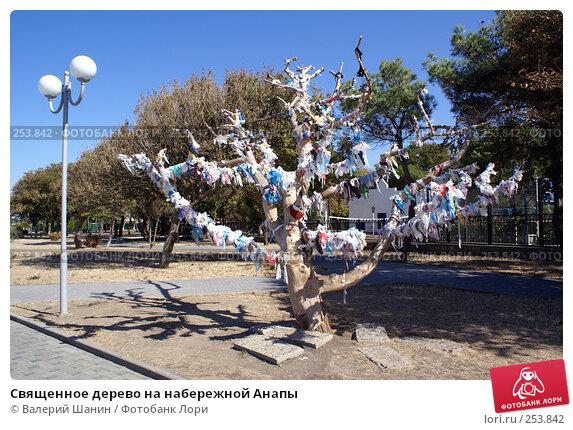 Купить «Священное дерево на набережной Анапы», фото № 253842, снято 15 сентября 2007 г. (c) Валерий Шанин / Фотобанк Лори