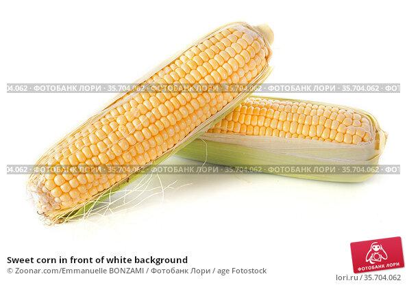 Sweet corn in front of white background. Стоковое фото, фотограф Zoonar.com/Emmanuelle BONZAMI / age Fotostock / Фотобанк Лори