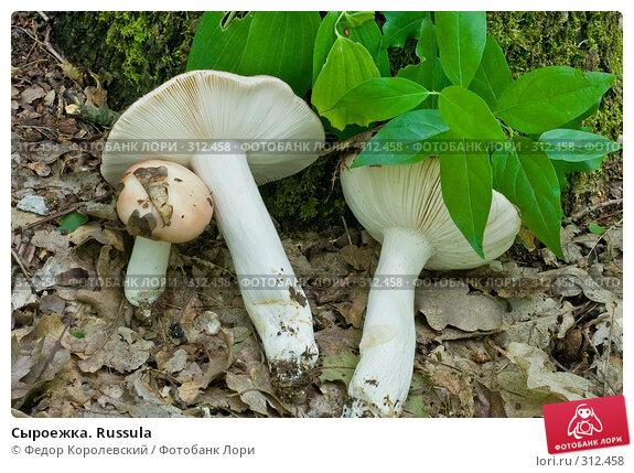 Сыроежка. Russula, фото № 312458, снято 4 июня 2008 г. (c) Федор Королевский / Фотобанк Лори