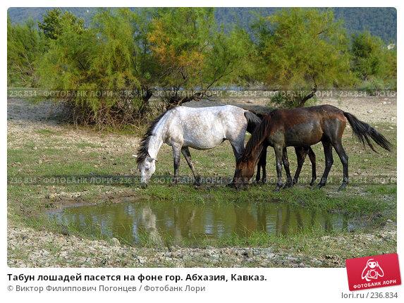 Табун лошадей пасется на фоне гор. Абхазия, Кавказ., фото № 236834, снято 28 августа 2006 г. (c) Виктор Филиппович Погонцев / Фотобанк Лори