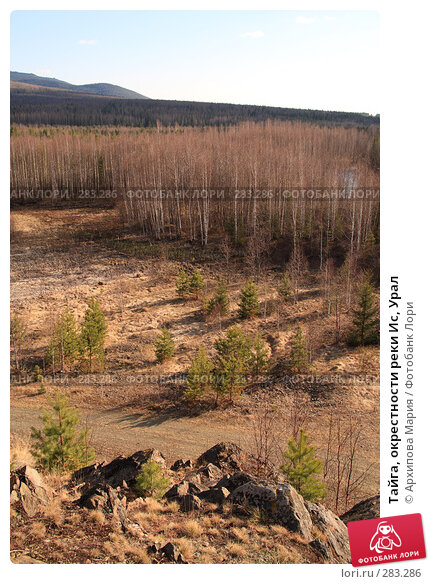 Тайга, окрестности реки Ис, Урал, фото № 283286, снято 10 мая 2008 г. (c) Архипова Мария / Фотобанк Лори