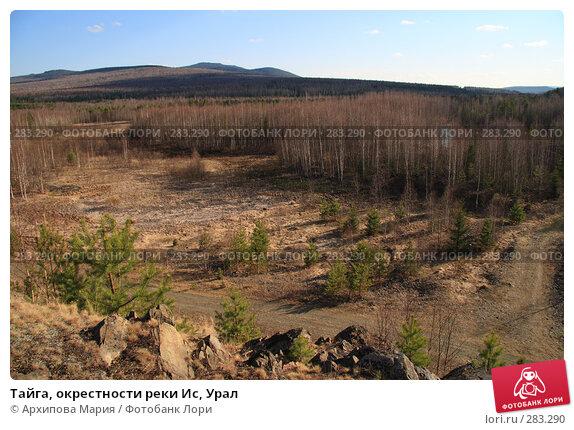Тайга, окрестности реки Ис, Урал, фото № 283290, снято 10 мая 2008 г. (c) Архипова Мария / Фотобанк Лори