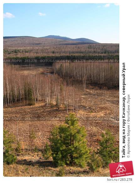 Тайга, вид на гору Качканар, северный Урал, фото № 283278, снято 10 мая 2008 г. (c) Архипова Мария / Фотобанк Лори