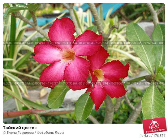 Купить «Тайский цветок», фото № 176374, снято 14 марта 2007 г. (c) Елена Гордеева / Фотобанк Лори