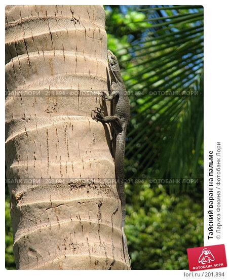 Тайский варан на пальме, фото № 201894, снято 4 декабря 2007 г. (c) Лариса Фокина / Фотобанк Лори