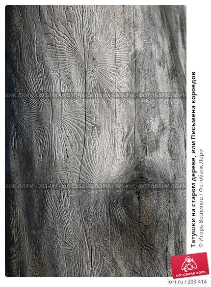 Купить «Татушки на старом дереве, или Письмена короедов», фото № 203414, снято 16 февраля 2008 г. (c) Игорь Веснинов / Фотобанк Лори
