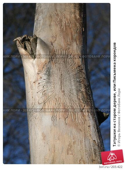 Татушки на старом дереве, или Письмена короедов, фото № 203422, снято 16 февраля 2008 г. (c) Игорь Веснинов / Фотобанк Лори