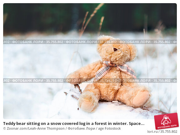 Teddy bear sitting on a snow covered log in a forest in winter. Space... Стоковое фото, фотограф Zoonar.com/Leah-Anne Thompson / age Fotostock / Фотобанк Лори
