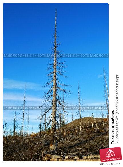 Техногенный лес, фото № 88114, снято 25 мая 2017 г. (c) Валерий Александрович / Фотобанк Лори