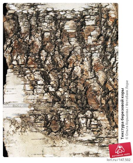 Текстура березовой коры, фото № 147502, снято 13 августа 2007 г. (c) Ольга Хорькова / Фотобанк Лори