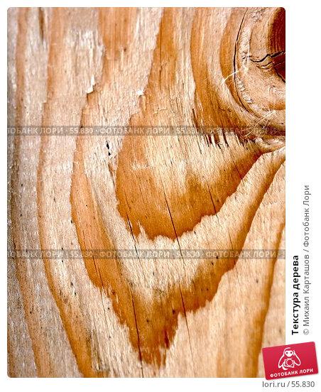 Текстура дерева, эксклюзивное фото № 55830, снято 27 мая 2007 г. (c) Михаил Карташов / Фотобанк Лори
