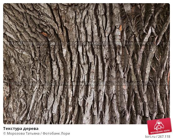 Текстура дерева, фото № 267118, снято 22 августа 2007 г. (c) Морозова Татьяна / Фотобанк Лори