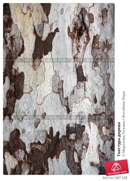 Текстура дерева, фото № 267126, снято 13 апреля 2008 г. (c) Морозова Татьяна / Фотобанк Лори