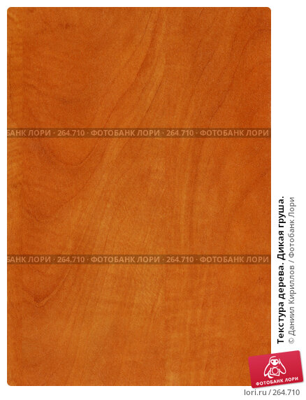 Купить «Текстура дерева. Дикая груша.», фото № 264710, снято 18 марта 2018 г. (c) Даниил Кириллов / Фотобанк Лори