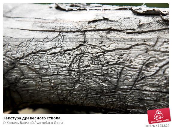 Купить «Текстура древесного ствола», фото № 123822, снято 25 мая 2007 г. (c) Коваль Василий / Фотобанк Лори