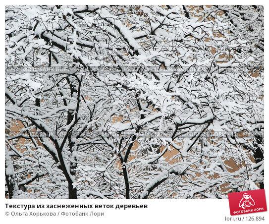 Текстура из заснеженных веток деревьев, фото № 126894, снято 16 ноября 2007 г. (c) Ольга Хорькова / Фотобанк Лори