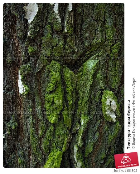 Текстура - кора березы, фото № 66802, снято 17 августа 2017 г. (c) Вадим Кондратенков / Фотобанк Лори