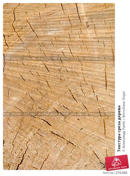 Текстура среза дерева, фото № 274686, снято 30 марта 2017 г. (c) Александр Fanfo / Фотобанк Лори