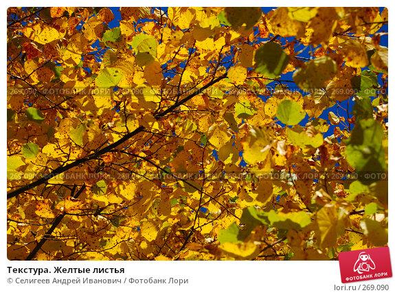 Текстура. Желтые листья, фото № 269090, снято 6 сентября 2006 г. (c) Селигеев Андрей Иванович / Фотобанк Лори