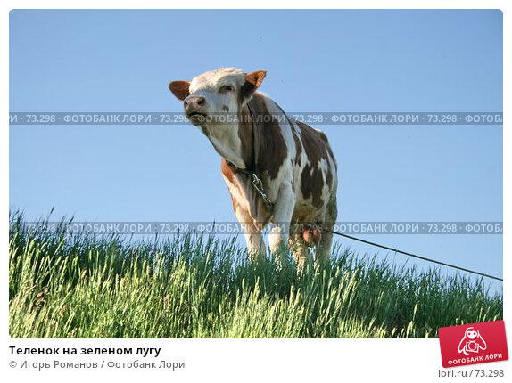Теленок на зеленом лугу, фото № 73298, снято 20 мая 2007 г. (c) Игорь Романов / Фотобанк Лори