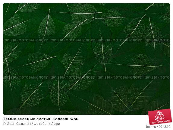Темно-зеленые листья. Коллаж. Фон., фото № 201810, снято 14 февраля 2008 г. (c) Иван Сазыкин / Фотобанк Лори