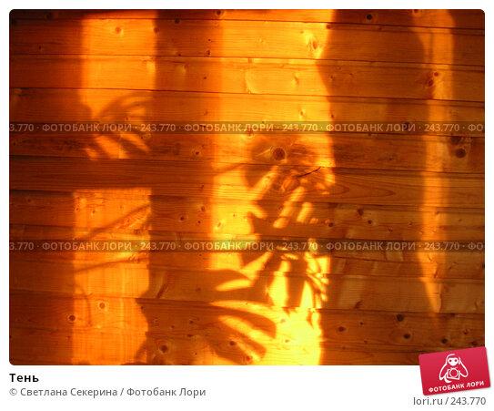 Тень, фото № 243770, снято 2 июля 2006 г. (c) Светлана Секерина / Фотобанк Лори