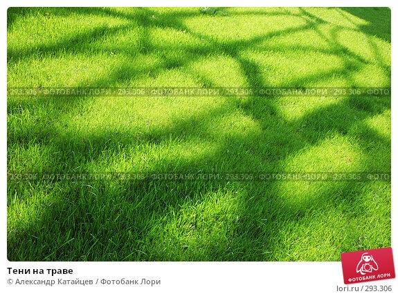 Тени на траве, фото № 293306, снято 17 мая 2008 г. (c) Александр Катайцев / Фотобанк Лори