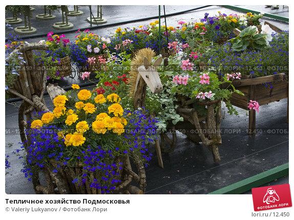 Тепличное хозяйство Подмосковья, фото № 12450, снято 8 июля 2005 г. (c) Valeriy Lukyanov / Фотобанк Лори