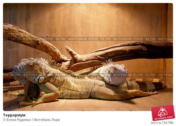 Террариум, фото № 54790, снято 10 сентября 2005 г. (c) Елена Руденко / Фотобанк Лори