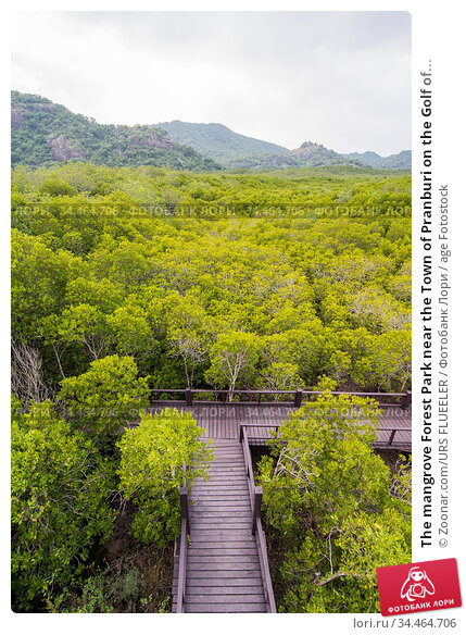 The mangrove Forest Park near the Town of Pranburi on the Golf of... Стоковое фото, фотограф Zoonar.com/URS FLUEELER / age Fotostock / Фотобанк Лори
