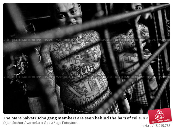 essays on gangs Street gangs research papers look at the different factors that influence the participation in gangs buy custom college sociology papers now.