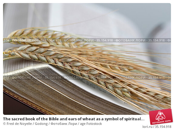 The sacred book of the Bible and ears of wheat as a symbol of spiritual... Стоковое фото, фотограф Fred de Noyelle / Godong / age Fotostock / Фотобанк Лори