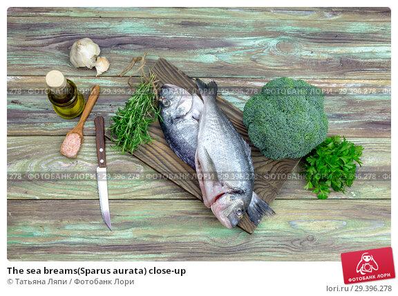 Купить «The sea breams(Sparus aurata) close-up», фото № 29396278, снято 5 ноября 2018 г. (c) Татьяна Ляпи / Фотобанк Лори