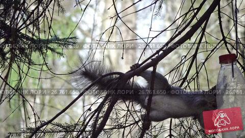 The squirrel in the wood eats from the feeding trough made of a plastic bottle, видеоролик № 26761650, снято 7 июня 2009 г. (c) Куликов Константин / Фотобанк Лори