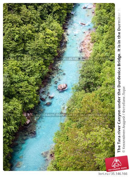 The Tara river Canyon under the Durdevica Bridge. It is in the Durmitor National park. It is located in northwestern Montenegro in the Zabljak municipality. Стоковое фото, фотограф Кекяляйнен Андрей / Фотобанк Лори
