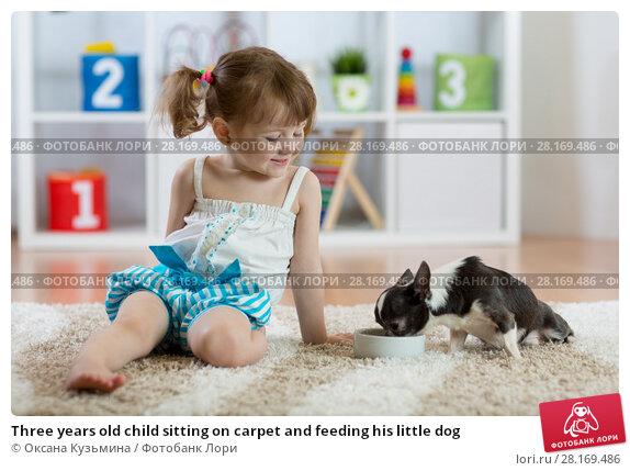 Купить «Three years old child sitting on carpet and feeding his little dog», фото № 28169486, снято 18 марта 2018 г. (c) Оксана Кузьмина / Фотобанк Лори