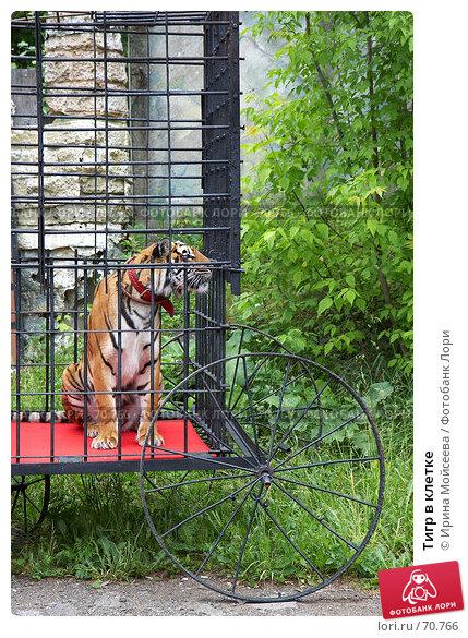 Тигр в клетке, эксклюзивное фото № 70766, снято 10 июня 2007 г. (c) Ирина Мойсеева / Фотобанк Лори
